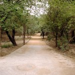 Mehrauli Archaeological Park